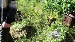 Смотреть Кот-охранник против псинки