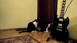 Кошка просит прощения у товарища смотреть видео прикол - 0:25