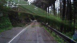 Лес повалился на авто смотреть видео прикол - 0:52