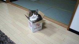 Смотреть Мару против коробки