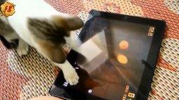 Смотреть Смешные коты в сборке с озвучкой