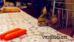 Приколы про котов и кошек смотреть видео прикол - 10:07