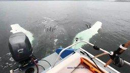 Рыбак повстречал кита смотреть видео - 1:30