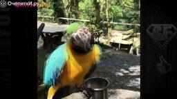 Попугаи: приколы с озвучкой смотреть видео прикол - 5:36