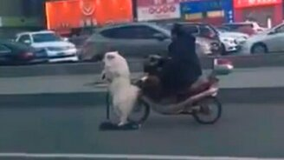 Собака на самокате смотреть видео прикол - 0:20