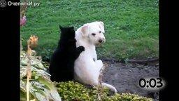 Смотреть Кошки массируют собак