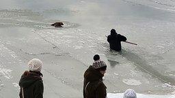 Как зимой люди собаку спасли
