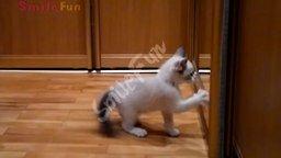 Смотреть Прикольные до слёз ролики с кошками