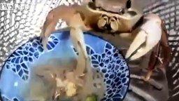 Смотреть Краб ест лапшу