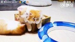Смотреть Милые котята и их мама