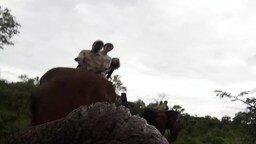Смотреть Умненький слон