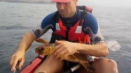 Смотреть Человек черепахе друг