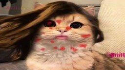 Смотреть Смешные курьёзы с кошками и котами