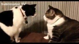 Смотреть Смешные кошки и собаки