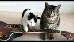 Смотреть Смешные коты с озвучкой