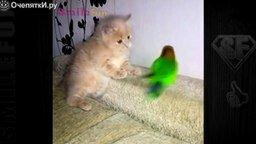 Смотреть Смешные попугаи и коты