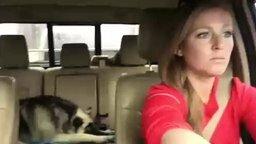 Собака подпевает хозяйке смотреть видео прикол - 2:26