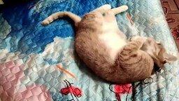 Смотреть Кот и морковка