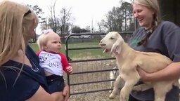 Смотреть Девочка общается с козлёнком