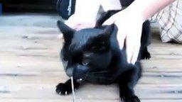 Смотреть Змею в носу у кота