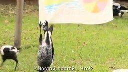 Я - летучая мышь, а не птица! смотреть видео прикол - 0:51
