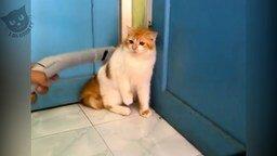 Коты и пылесосы смотреть видео прикол - 5:28