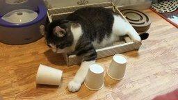 Смотреть Кошка играет в стаканчики
