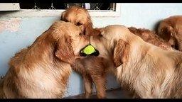 Смотреть Весёлые собаки