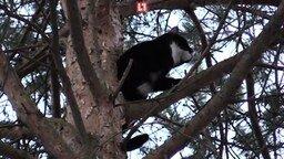 Смотреть Спасли кота с дерева