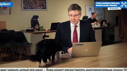 Кот вмешался в прямой эфир смотреть видео прикол - 0:17