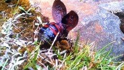 Смотреть Странные и необычные букашки