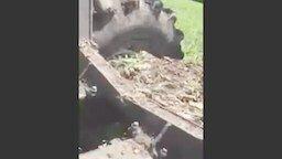 Смотреть Тракторист вызволил мишку