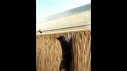 Чтобы кошка не удрала со двора смотреть видео прикол - 0:38