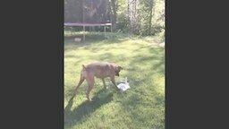 Смотреть Пёс против фонтана