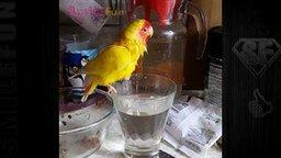 Смотреть Смешные попугаи в коллекции