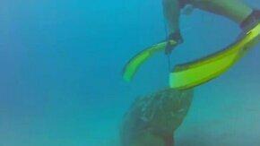 Смотреть Морской окунь напал на ласту