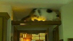 Создал дом для своих кошек смотреть видео прикол - 2:25