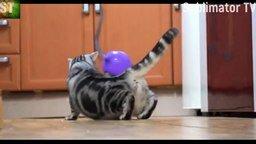 Смешнявки с котами, котятами и кошками смотреть видео прикол - 8:04