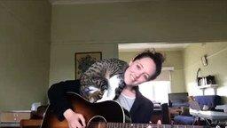 Смотреть Хозяйка-гитаристка развлекает своего кота
