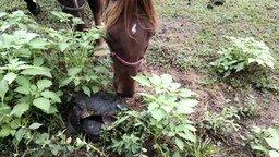 Смотреть Лошадь застукала черепах