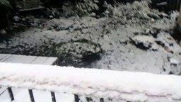 Первый снег в жизни пса
