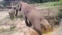 Смотреть Слониха помогает своему сынишке