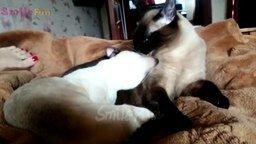 Смотреть Сборка со смешными и неожиданными выходками кошек