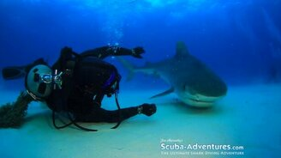 Любовь к акулам смотреть видео прикол - 2:31