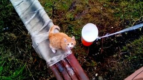 Смотреть Подъёмник для кота