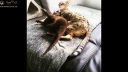 Дружные выдра и котик смотреть видео прикол - 2:12