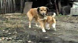 Смотреть Кошачьи объятия собаки