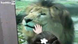 Смотреть Дети общаются со львом