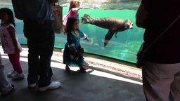 Смотреть Чуткий морской лев