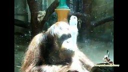 Смотреть Много смешных обезьян